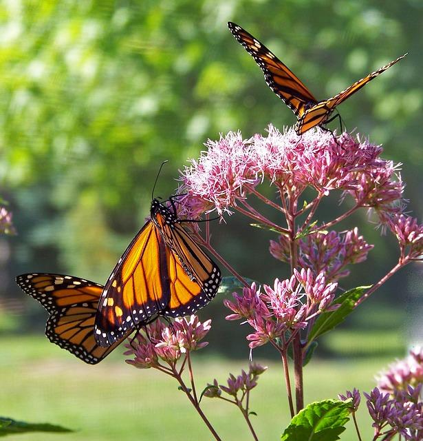 butterfly-18355_640